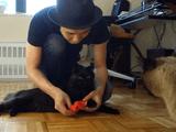 しゃべる猫「しおちゃん」の緊急入院から退院までのドキュメンタリー映像が飼い主さんの「しおちゃん」への愛にあふれている!