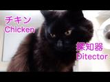 「チキン探知機」な猫のしおちゃん