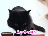 「ん~ やっほ~♪」っていう猫のしおちゃん