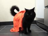 ハロウィンでテンション上がり気味な飼い主さんに追いかけられた猫のティーちゃんが、自分をジャンプして飛び越そうとしたので「あぶないなぁ」って言う猫のしおちゃん