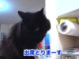 しゃべる猫「しおちゃん」の出欠確認で新語登場/飼い主さんから「しお大将!」と呼べれて「おれだよ!」と応える猫のしおちゃん