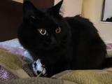 おもちゃを激しくカミカミして、そのおもちゃがビチャビチャになると興味を失う猫のしおちゃん