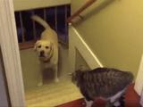 だって怖いんだもん・・・。鎮座する猫さんが怖くてオロオロするワンコたち