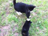 子犬の進撃を肉球でブロックする猫