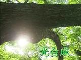 二酸化炭素が資源に!夢の人工光合成/NHK・クローズアップ現代