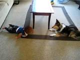 自分の周りを走り回る犬に、これ以上ないくらい大喜びする赤ちゃん