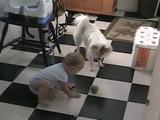ニヤニヤが止まらない!テニスボールで遊ぶ赤ちゃんと犬がとっても楽しそう♪