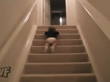 驚異的なスピードで階段を降りる赤ちゃん