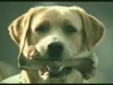海外のおもしろCM【犬の浮気】