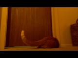 ドアストッパーをビヨヨヨヨーンって鳴らして飼い主を起こす技を覚えた猫のブーちゃん