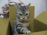趣味は箱叩き。今日も無心でバシバシ叩くネコ