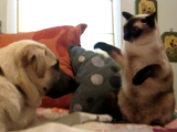 にゃんこの逆鱗にふれて猫パンチを浴びまくる犬