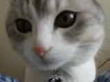 ずるいじゃないか、こんな可愛いネコに起こしてもらえるなんて・・・。