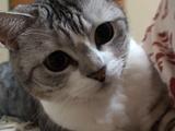 モフモフ感がとってもよく分かる、超高画質のネコ動画「迫ってくるネコ」