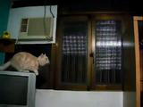 自分のジャンプ力を過信しすぎたネコ