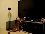 ネコ「ゲームに夢中でぜんぜん遊んでくれないから、こっそり電源消してやるニャ・・・。」