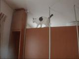 落ちそうで落ちない猫のテンテンちゃん