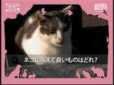 あなたは何問、正解できる?/猫検定-模擬試験(全6問)
