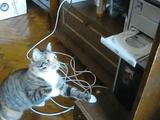 こいつ・・・、痛みを感じないのか?/強烈なネコパンチを何回浴びせても復活するDVDトレイに困惑する猫