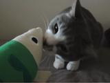 お魚のオモチャを相手に荒ぶる猫のモアレちゃん