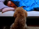 寝ている飼い主さんと遊びたい。でも起こすと可哀想だから目を覚ましてくれるまで傍でジッと待つネコの後ろ姿がカワイイ