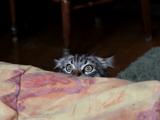 チラリズムな猫