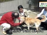 原発事故で飼い主とはぐれたペット約200匹を保護している大阪府・能勢町にある動物保護施設「ハッピーハウス」の取組み