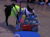 ポイ捨て禁止だワン!清掃作業員の格好をしてゴミ拾いをしてくれる犬