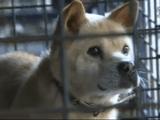 原発事故の影響で家族と一緒に暮らせなくなった福島県飯舘村の犬たちが一時的に里帰りして家族と再会するのを追ったドキュメンタリー