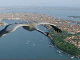 鳥の美しさがよく分かる、飛行中のツルを手が届きそうな距離で撮影した映像
