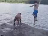 湖に飛び込んだ飼い主さんを全力で助けようとする犬「たたた大変だぁあああ!ご主人様が湖に落っこちたぁああ」