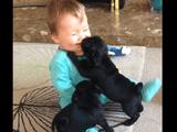 人間の赤ちゃん vs パグ犬の赤ちゃん