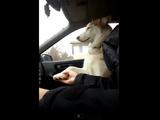 犬「ドライブの時は手をつないでてくれなきゃヤダっていってるでそ」