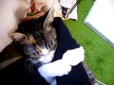 うらやましいにも程がある!抱きついてきて離れようとしない超甘えん坊な「だきつき猫」