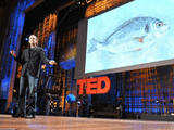 どうすれば魚を「持続可能な食材として」メニューに載せ続けることができるのか?/ダン・バーバー