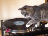 猫のDJがカワイイ (曲はボブマーリー)