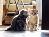 子猫A「ちょっと通りますね~」/子猫B「おっと坊やココは通せねぇ。どうしても通りたければオレを倒してから行くんだな」