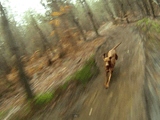 全力で森の中を駆け抜けるワンコをマウンテンバイクから撮影したら、こんなにカッコイイ映像が撮れました♪