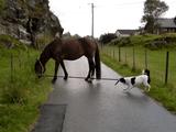 お馬さんの手綱をくわえて散歩させようと頑張るワンコと、目の前に生えてる草が魅力的すぎてそれどころではないお馬さん