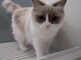 自分から一緒にお風呂に入ってくるくせに濡れた手で触られるは嫌がる猫