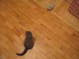見事なドロップキックでロボット犬を一撃で倒す子猫