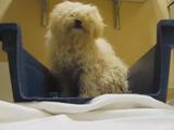 安楽死させられる前日に救出され、怯えきっていた犬「イーディ」が再び心を開くまで