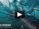 いかにして巨大イカ(ダイオウイカ)を見つけたか/エディス・ウィダー