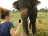 スマートフォンのアプリで遊んでいる象さん