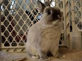 実は結構速いんです。部屋の中で本気を出すウサギ