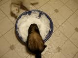 うっひょ~、何だコレ冷てええええ! 生まれて初めて雪を触ったフェレットの反応がカワイイ