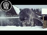 フワッフワな新雪なのをいいことに容赦なく投げ飛ばされる猫さんを、極上のスローモーション映像でお届け