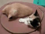 子猫の、子猫による、子猫のための、もぐら叩き
