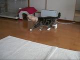 紙袋を被ってパトロールするのがマイブームな猫