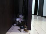 ドアの隙間にしっぽり収まってご満悦の猫のまるちゃん